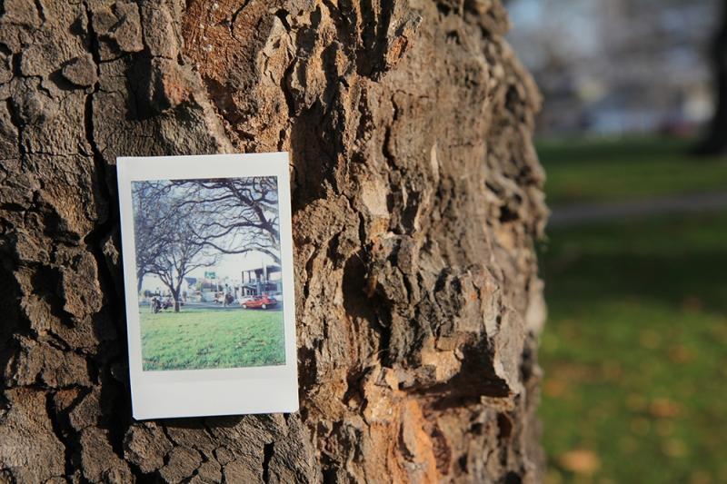 1_tree