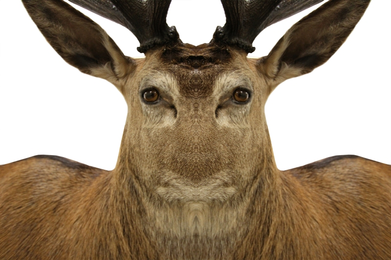 JanetLilo_deer