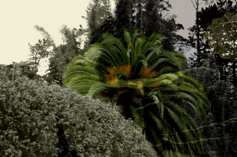 JanetLilo_palm