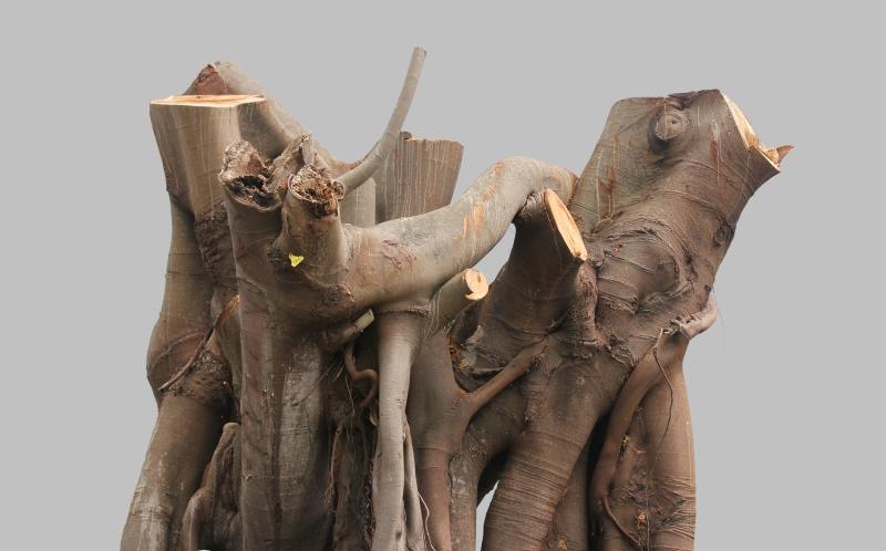 treestump
