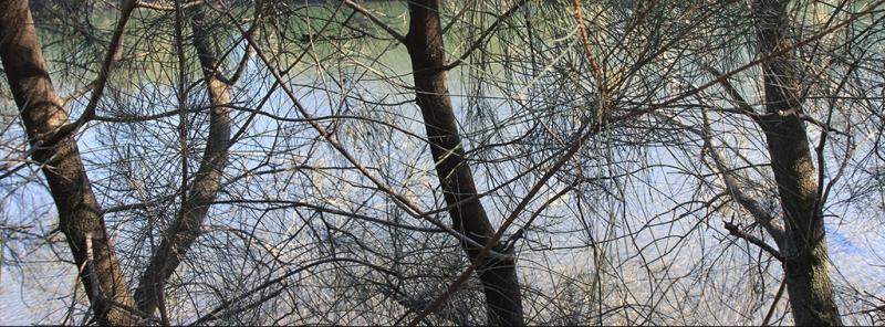 Sydneytreeswater