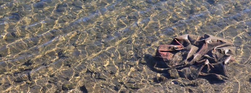 Sydneywaterrubbish